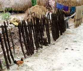 File:Dung dried on sticks in Bangladesh.jpg