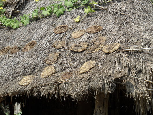 File:GIZ Volkmer Nepal dung drying on roof.JPG