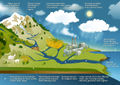 Water cycle FAO 2015.jpg