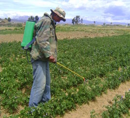 Farmer using filtered fertilizer for onions Bolivia.jpg