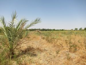 Crop Cultivation in Desert.jpg