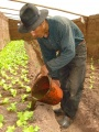 Farmer using fertilizer produced by his own tube digester Bolivia.JPG