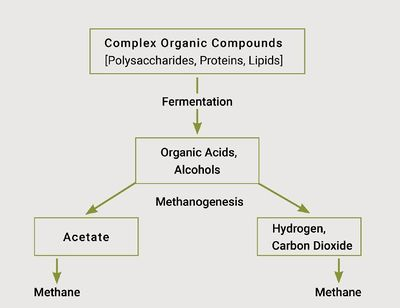 Methane Formation Process.JPG