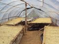 GIZ Peru Quiroz Solar drying inside.jpg