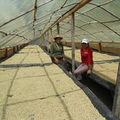 Microenergy International Peru solar drying Victoria.jpg