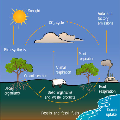 Carboncycle.jpg