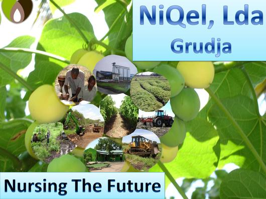 File:EN-Nursing The Future-Niqel, Lda.pdf