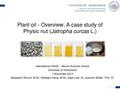 Plant Oil - A Case Study of Physic nut (Jatropha curcas L.).pdf